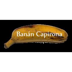 Lyofilizované BANÁNY