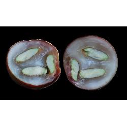 Lyofilizované Camu Camu