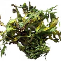 MARCO SACHA - řezaná nadzemní část sušené rostliny